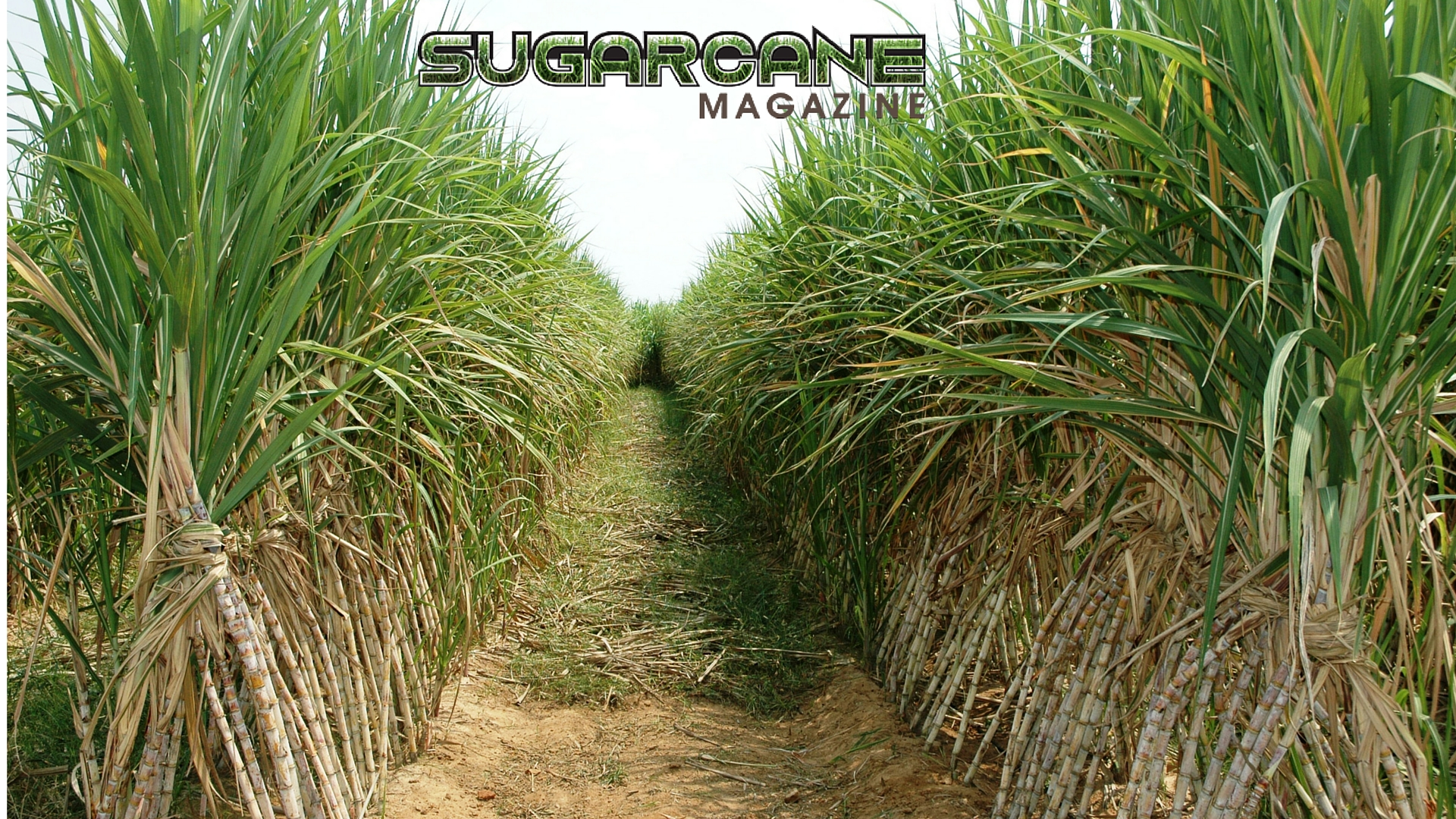 Sugarcane Magazine