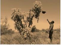 Samson Kambalu, Moses (Burning Bush), 2015, Digital Color, 50 sec.