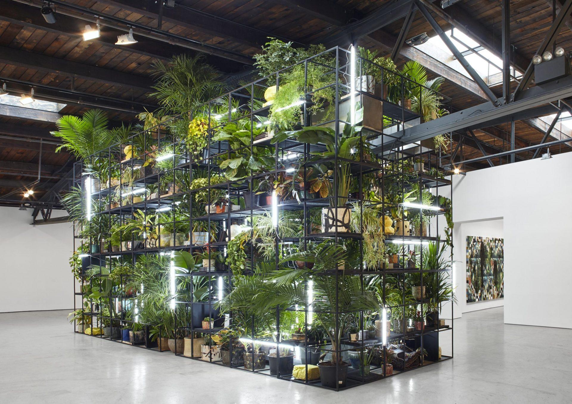 Rashid plants